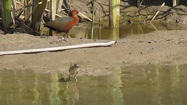 Birders Go Wild After 'Best Photobomb in History'