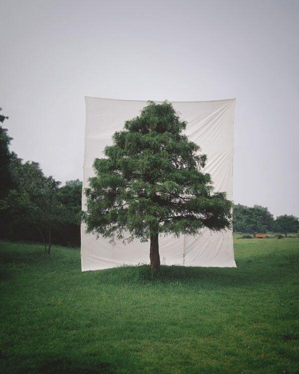 Tree #10, 2006
