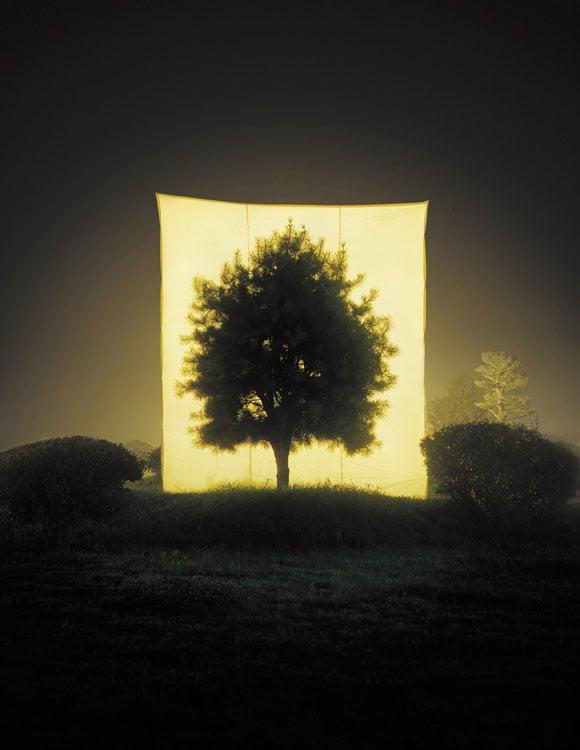 Tree #11, 2005