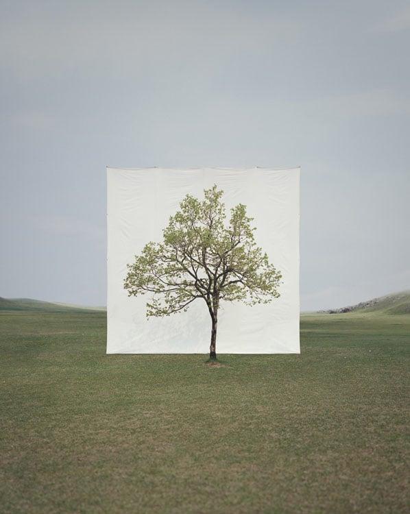 Tree #14, 2009