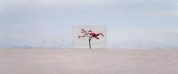 Tree #5, 2007