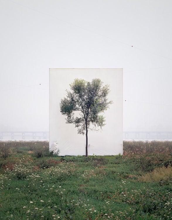 Tree #6, 2008