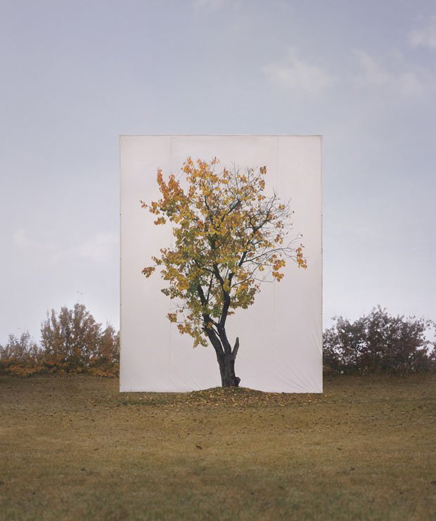 Photographs of Outdoor Trees Framed by Giant White Canvases