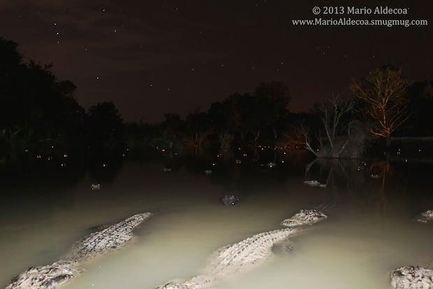 aligatorcam2