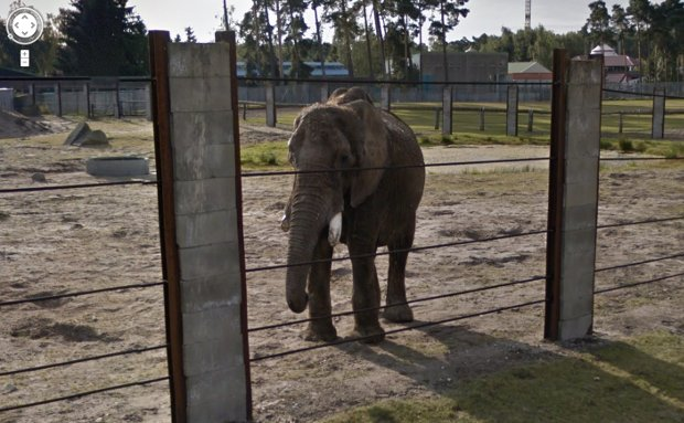 Tour Some of the World's Most Famous Zoos, Now on Google Street View