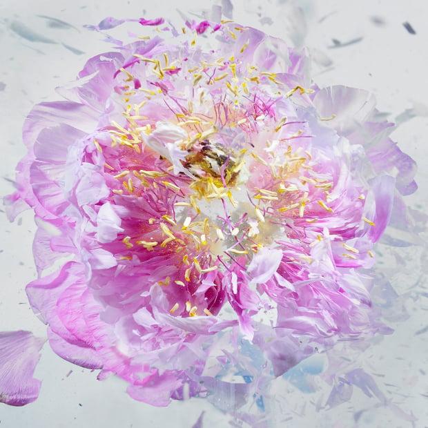 explodingflowers3