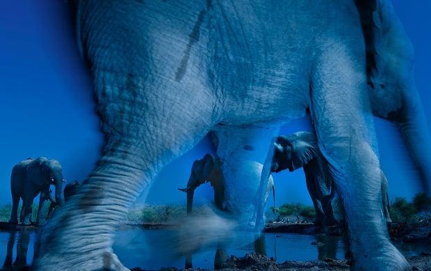 Ethereal Elephant Photo Crowned Wildlife Photo of the Year