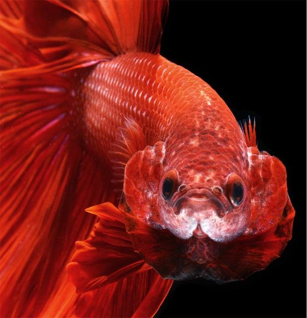fish_14