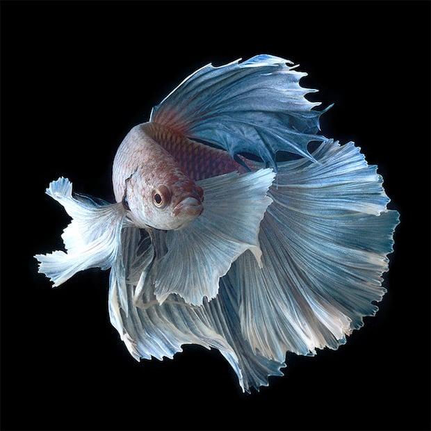 HD wallpapers iphone fish tank video wallpaper