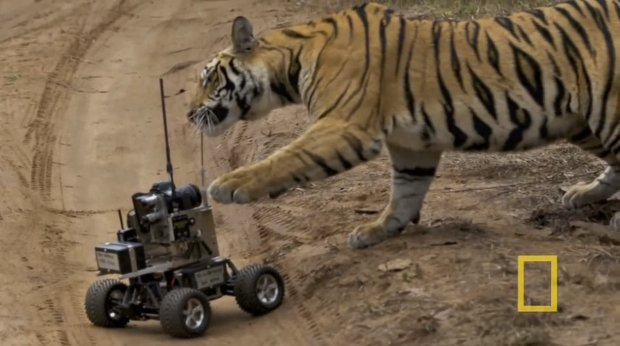tigerrobot1