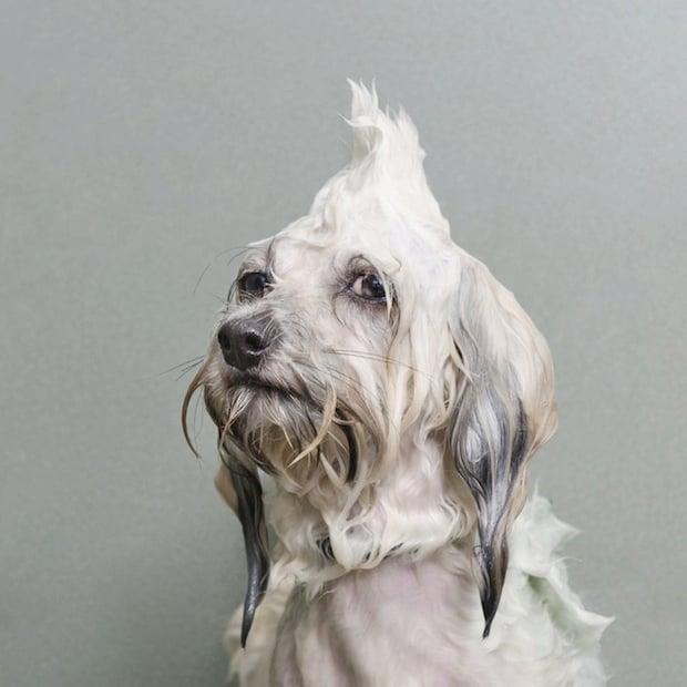 wetdog2