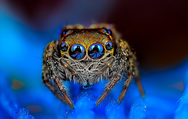 Mesmerizing (or Terrifying?) Macro Photos of Spiders Staring Straight at the Camera