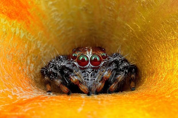 spider_6