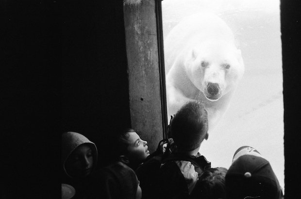 Polar Bear at the Zoo - Canada - Credit: Jo-Anne McArthur/We Animals