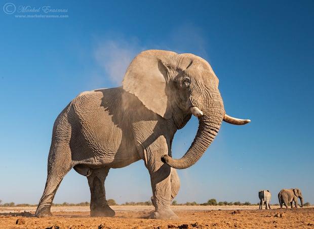 elephant_shake_2a_Etosha_2013