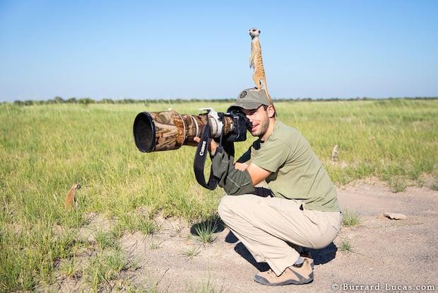 meerkats-1
