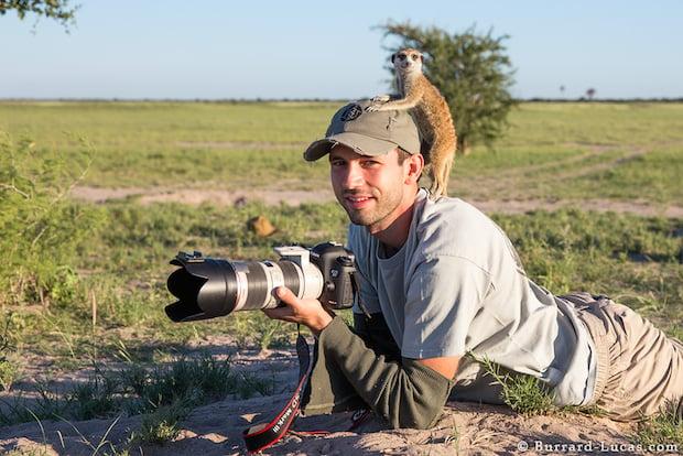 meerkats-5