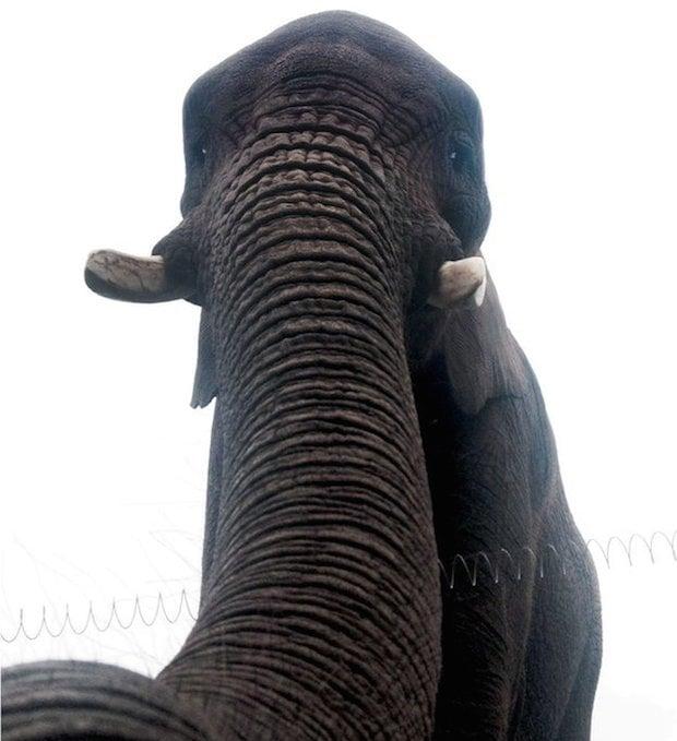 """Behold the World's First Elephant Selfie… an """"Elfie"""""""