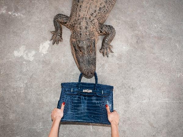 Tyler Shields Feeds Genuine $100K Hermes Bag to a Gator… Because… Art