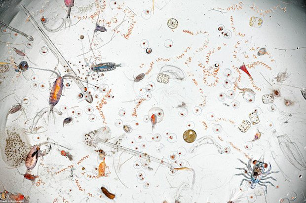 Photograph Captures the Amazing Amount of Life Found in a Splash of Seawater