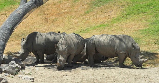 Geotagged Wildlife Photos Help Poachers Kill Endangered Animals