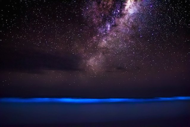bioluminescent1