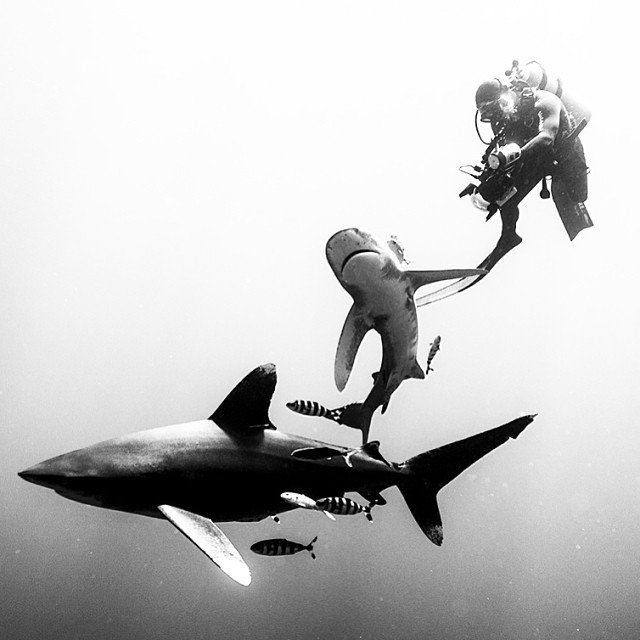 Meet the #Cagefree Photographer Running Discovery Channel's Instagram for Shark Week