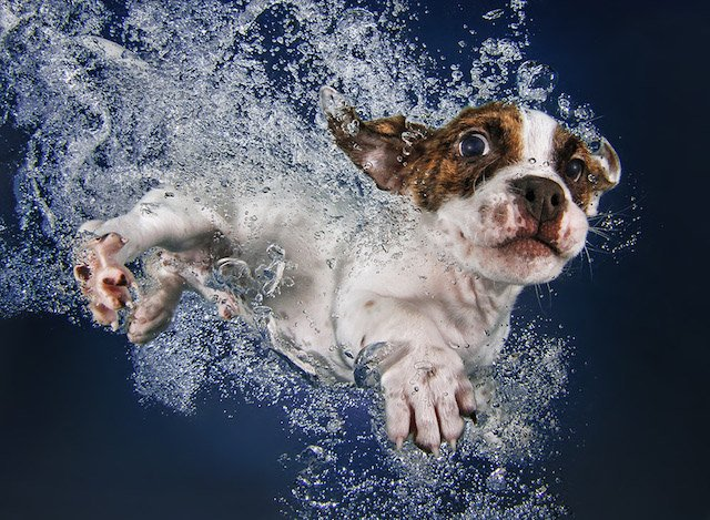Puppies Jumping Into Swimming Pools Make for Unbelievably Cute Photos