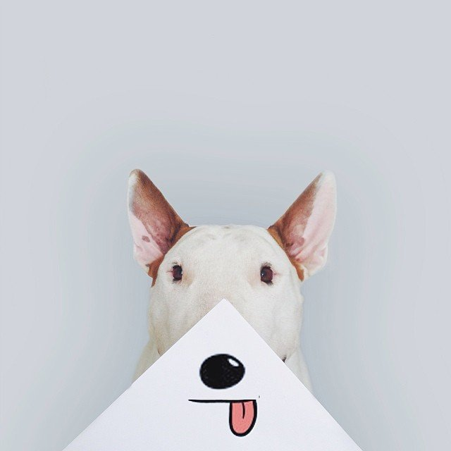 Artist Photographs His Adorable Bull Terrier Jimmy In Creative - Bull terrier art