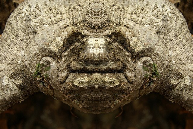Dream Creatures: Reflected Images of Tree Bark Reveal the Faces Hiding in the Forest