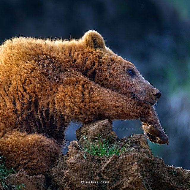 Photographer Marina Cano Captures Wild Animals In Their