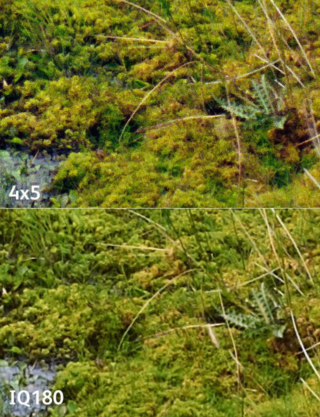 10 topping-moss-iq180-vs-4x5Portra400