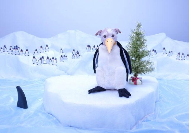Penguin 2011