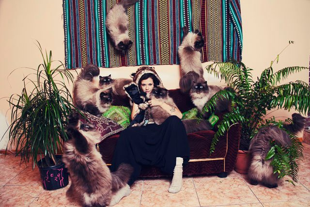 Clone Photography Turns Ordinary Cat Owners Into Crazy Cat People