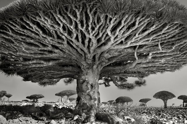 Photographer Beth Moon Spent 14 Years Hunting for the World's Most Ancient Trees