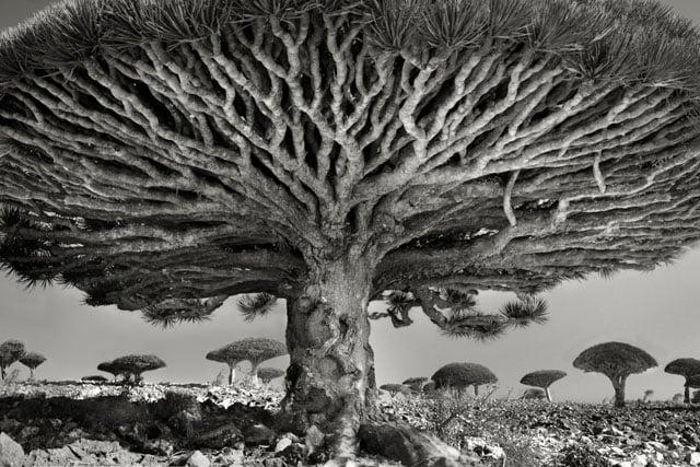 Trees - Magazine cover