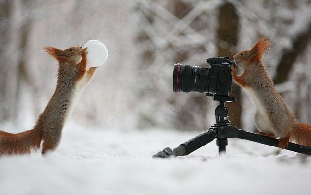 Photographer Captures a Cute Squirrel Photo Shoot