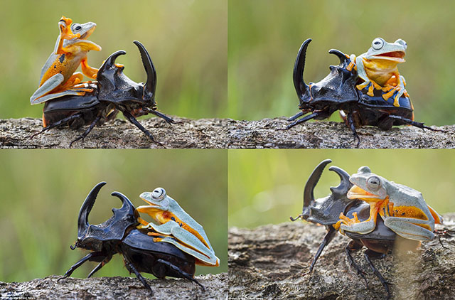 The frog's mouth opened in multiple shots and angles.