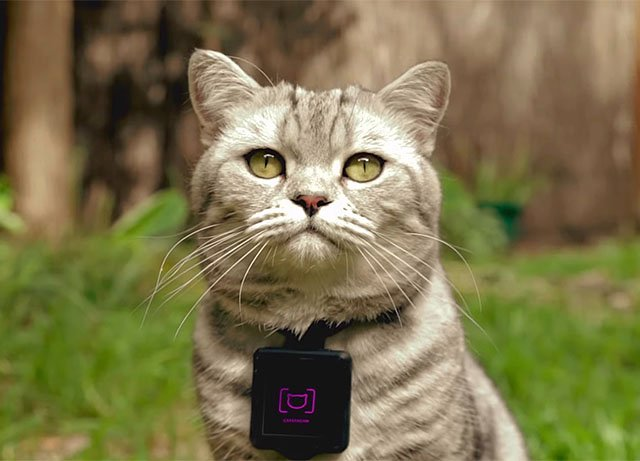 Catstacam Turns Your Cat Into an Instagram Photog