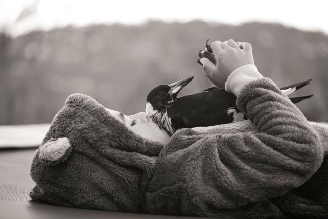 Touching Photos of a Family's Special Bond with the Magpie They Rescued