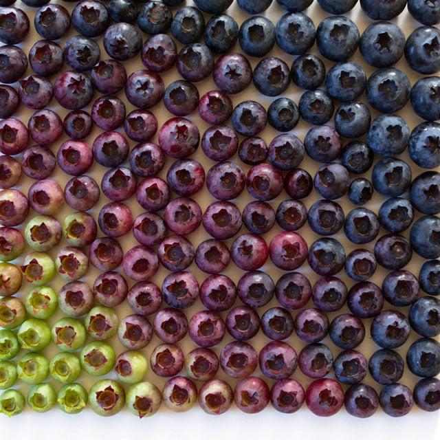 Blueberry+gradient+--+wrightkitchen.com