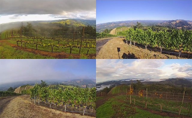 A Year in a Vineyard with a GoPro Time-Lapse