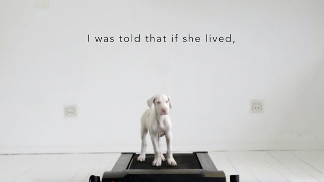 Time-Lapse Shows Rescued Puppy Growing Into Adulthood on a Treadmill