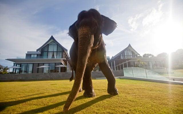 Elephant Blog_004