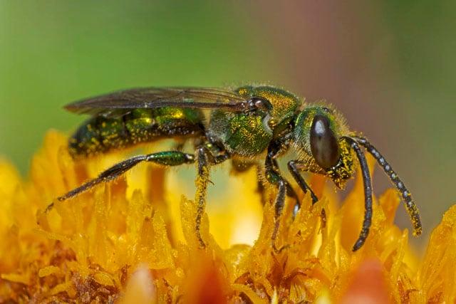 Green-Bee