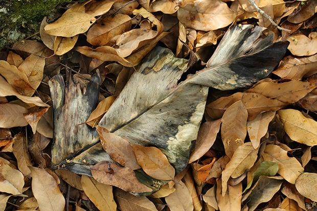 5D3 leaves