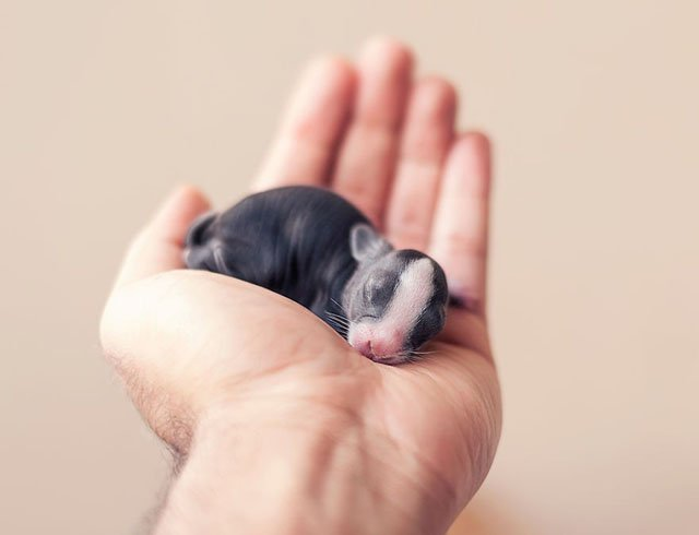 Photos of the First Weeks of Baby Bunnies' Lives
