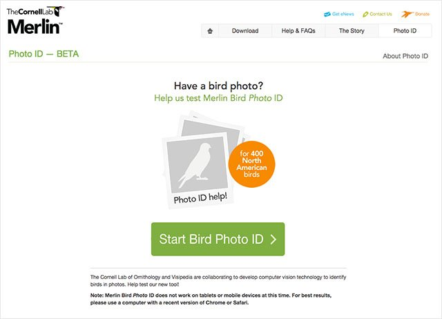 This Website Can Identify the Bird Species in a Photo