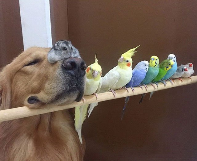Photos of an Unusual Pet Family Are a Hit Online