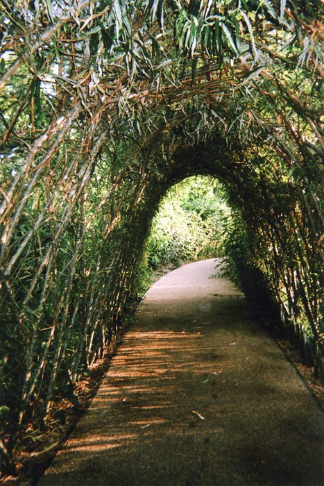 Nature's Tunnel or Light and the End, Stratford, by Ellen Rostant.